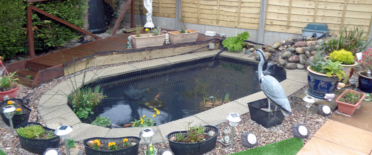 Pond and water feature services to dorset west hampshire for Koi pond maintenance service