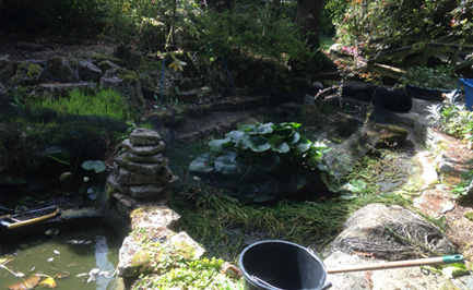 Pond maintenance services to dorset west hampshire and for Koi pond maintenance service